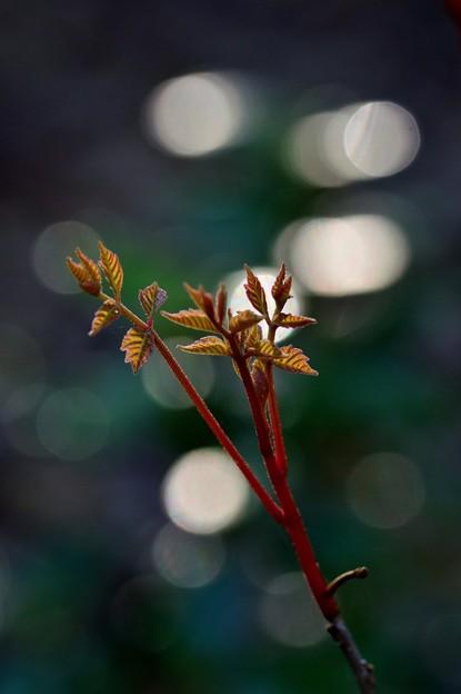 写真: 若葉の季節