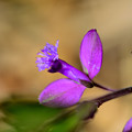 写真: 紫の飛行機
