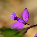 紫の飛行機