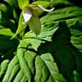写真: 葉に影を映して