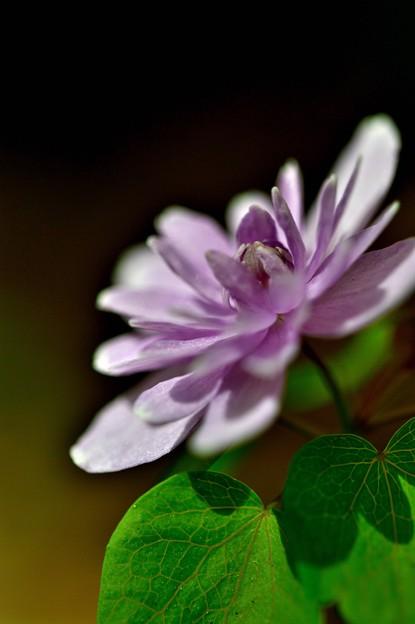 写真: 春のお花も終盤に