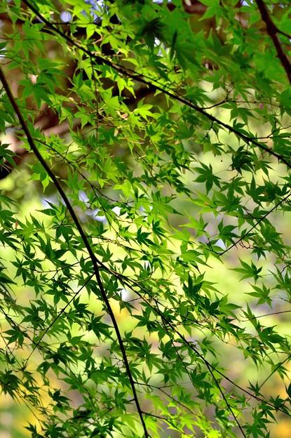 写真: 緑のグラデーション
