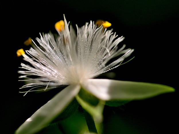 写真: 蕊の輝き