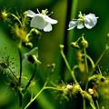 写真: 優しく咲いて強く生きる