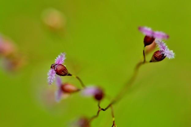 写真: 湿地の彩