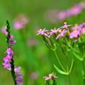 写真: 花のフィールド