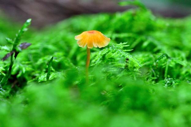 苔の森にて