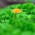 写真: 苔の森にて
