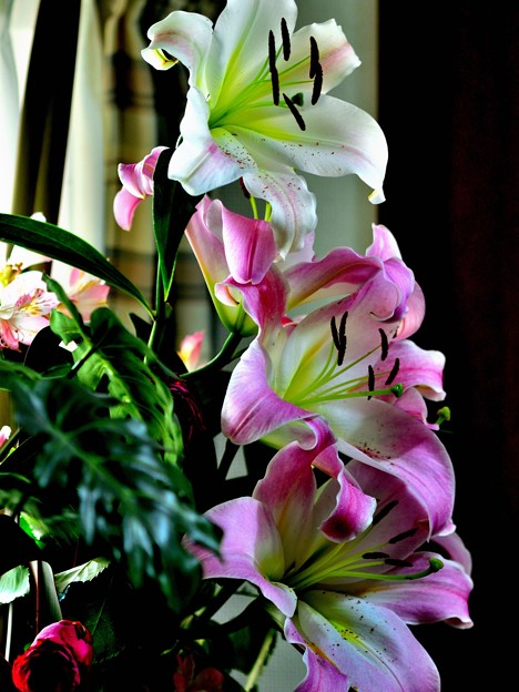 Photos: 愛をこめて花束を