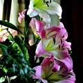 写真: 愛をこめて花束を