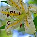 写真: 猛暑に咲く