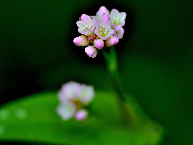 お山の楽しいお花たち