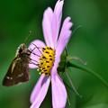 写真: 旬のお花で休憩中