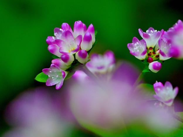 写真: 咲き進んできました