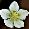 写真: 梅の花