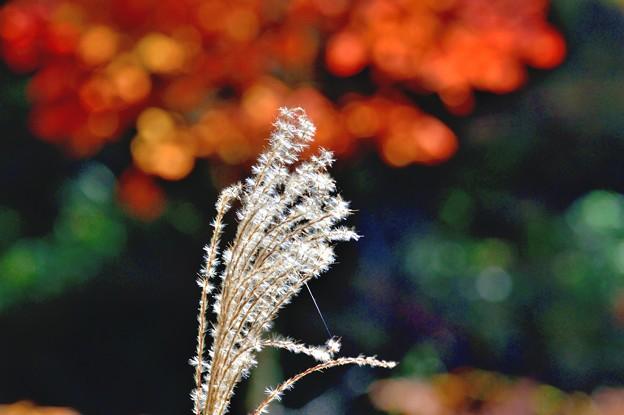天空の紅葉