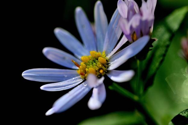 写真: 淡いブルーで
