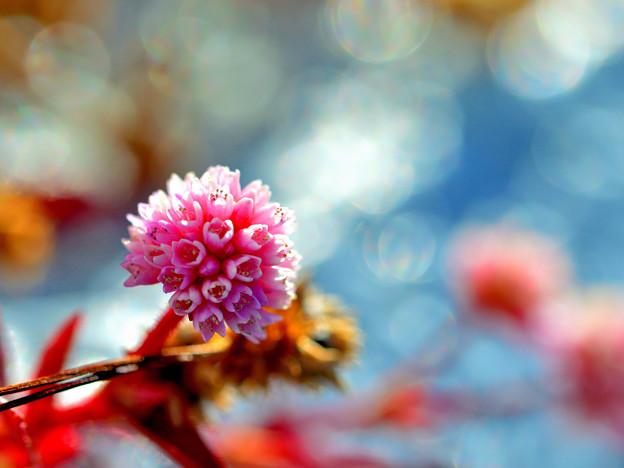 開花の時期