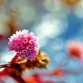 写真: 開花の時期