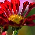 写真: 菊の季節に