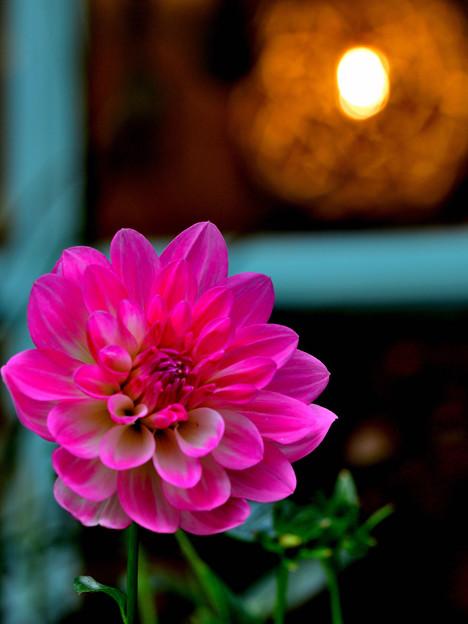 灯りが恋しい季節