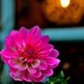写真: 灯りが恋しい季節