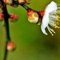 写真: 春ですか?