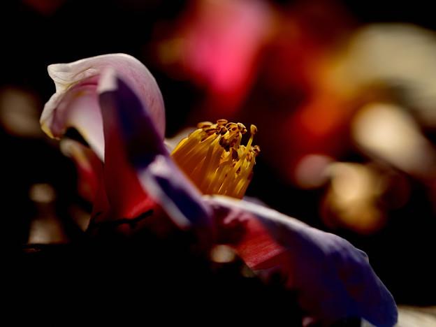 写真: 地に咲く