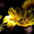 写真: 太陽の恵み