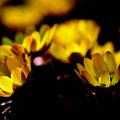 Photos: 照明