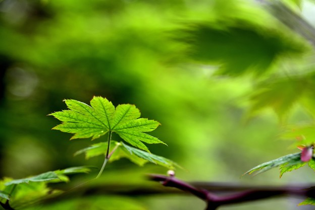 Photos: 緑濃く