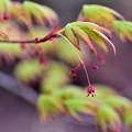 Photos: こちらも花の季節