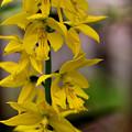 Photos: 春色黄色