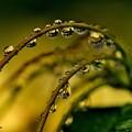 Photos: rainy days