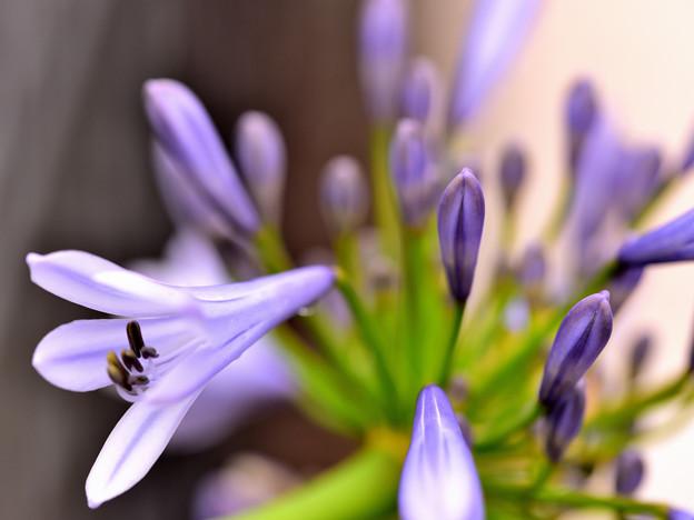 やっと開花~