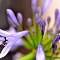 Photos: やっと開花~