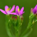 荒地の花束