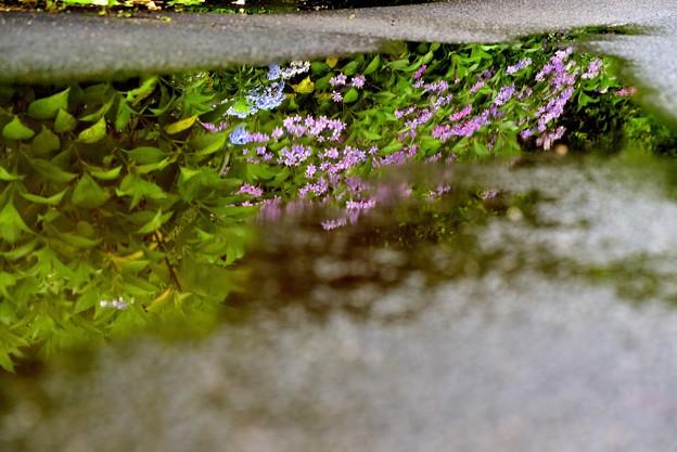 Photos: 水中花