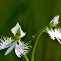 湿地に白の彩