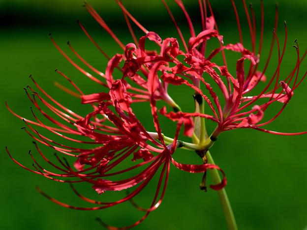 Photos: 開花の条件