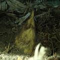 写真: 新筍 (3)