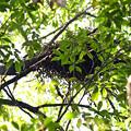 写真: 鳥の巣(裏山)