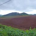 写真: 富良野の景色 (1)