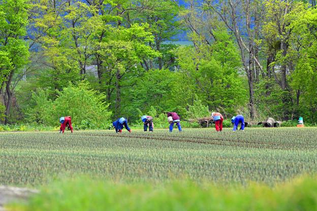 写真: 富良野の景色 (4)
