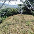 草刈り(ワラビ畑)