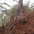 露に濡れた蜘蛛の巣