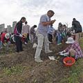 写真: 芋掘り大会 (4)