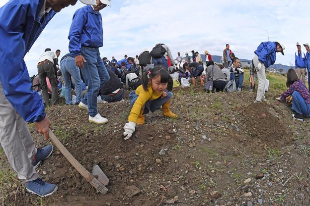 芋掘り大会 (15)