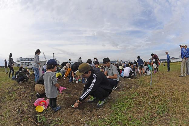 芋掘り大会 (21)