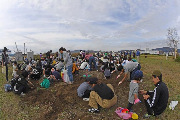 芋掘り大会 (22)